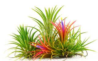 Домашние цветы и декоративные горшечные растения